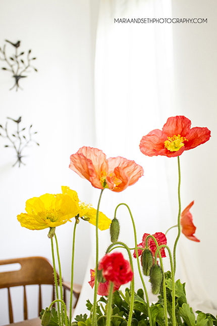Iceland Poppies | Maria and Seth Photography