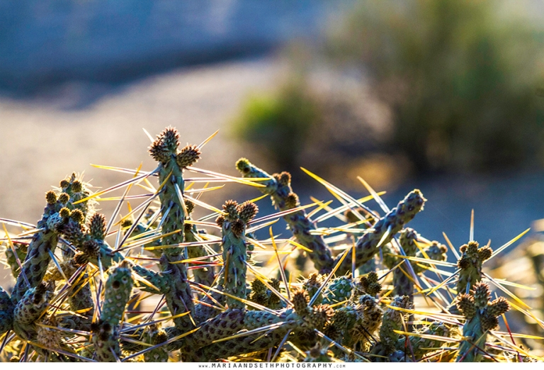 Southern California Redlands Photographer at Joshua Tree, Maria and Seth Photography