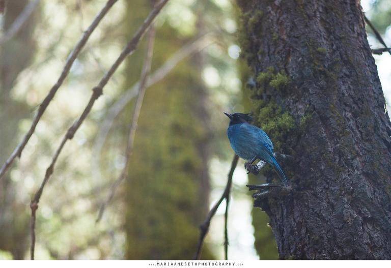 IMG_0008-sequoia