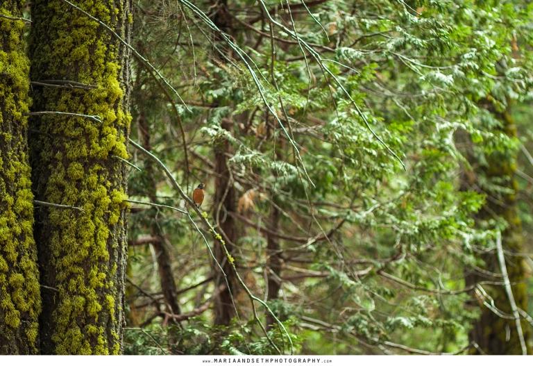 IMG_0030-sequoia
