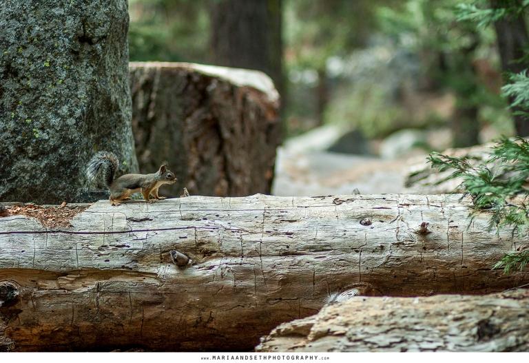 IMG_0060-sequoia
